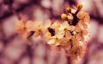 清新自然的花儿高清桌面壁纸
