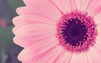 唯美植物清新桌面壁纸