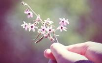 LOMO唯美植物特写壁纸