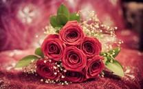 玫瑰壁纸高清桌面图集