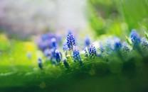 春天植物壁纸图片
