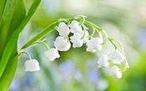 小清新花朵桌面壁纸