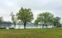 花和湖泊桌面壁纸