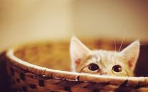萌猫锁屏桌面壁纸下载