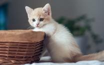 萌猫桌面高清壁纸