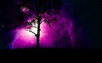 树影人星空桌面壁纸