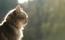 萌猫高清桌面壁纸