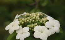春日花朵桌面壁纸