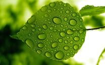 清新绿叶护眼桌面壁纸