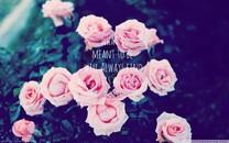 简约唯美花卉桌面壁纸