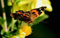 鲜花上的蝴蝶桌面壁纸