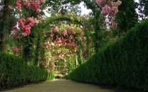 唯美园艺桌面壁纸