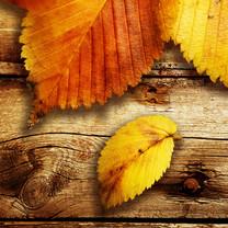 唯美叶子高清壁纸