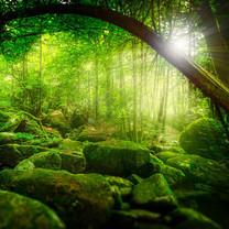 丛林里的阳光iPad壁纸