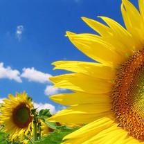 美丽的花卉iPad壁纸