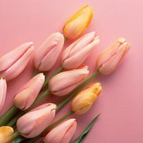 缤纷花卉写真iPad壁纸
