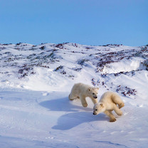 2016年Bing雪景主题iPad壁纸