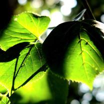 护眼绿色植物iPad壁纸