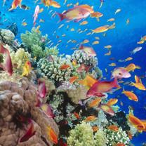 热带海底世界iPad壁纸