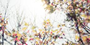 杂植物合集唯美壁纸