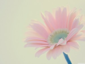 安卓花卉 唯美 清新手机壁纸