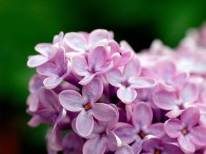 安卓高清 唯美 花朵 美丽手机壁纸