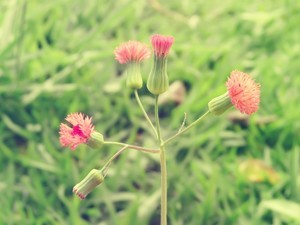 安卓唯美 植物手机壁纸