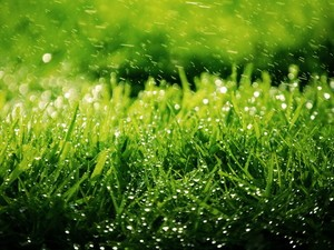 安卓清新 翠绿 稻草手机壁纸