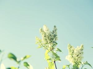 安卓清新 美丽 植物手机壁纸