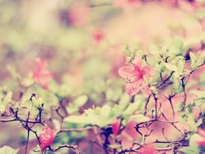 安卓唯美 花儿 自然手机壁纸