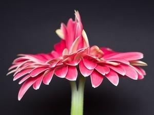 安卓自然 植物 精美手机壁纸