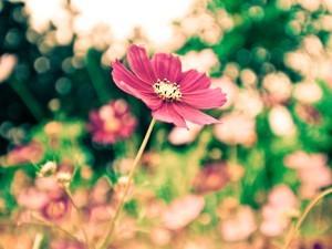 安卓清新 写真 植物手机壁纸