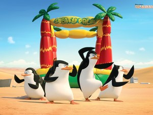 安卓企鹅 高清 马达加斯加手机壁纸