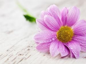 安卓唯美 花卉 粉色手机壁纸