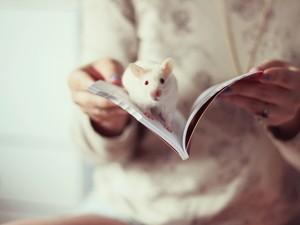 安卓宽屏 可爱 白鼠 小白手机壁纸