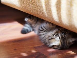 安卓卖萌 可爱 猫 小猫手机壁纸