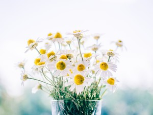 安卓简约 花卉 唯美手机壁纸