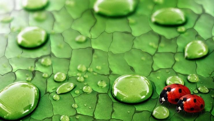 安卓绿色 养眼 高清手机壁纸