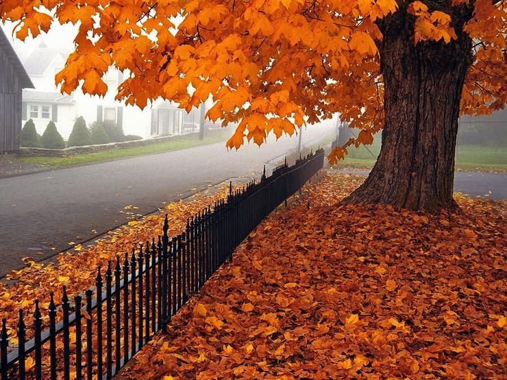 手机壁纸 壁纸详情  扫描二维码下载 壁纸标签 秋天风景大全打开高清