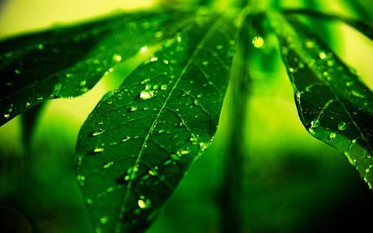 安卓宽屏 植物 风景 高清手机壁纸