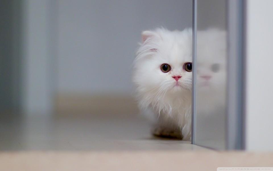 可爱动物宽屏壁纸下载