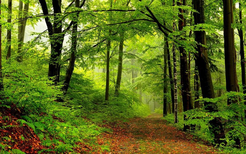 壁纸 风景 森林 桌面 960_600