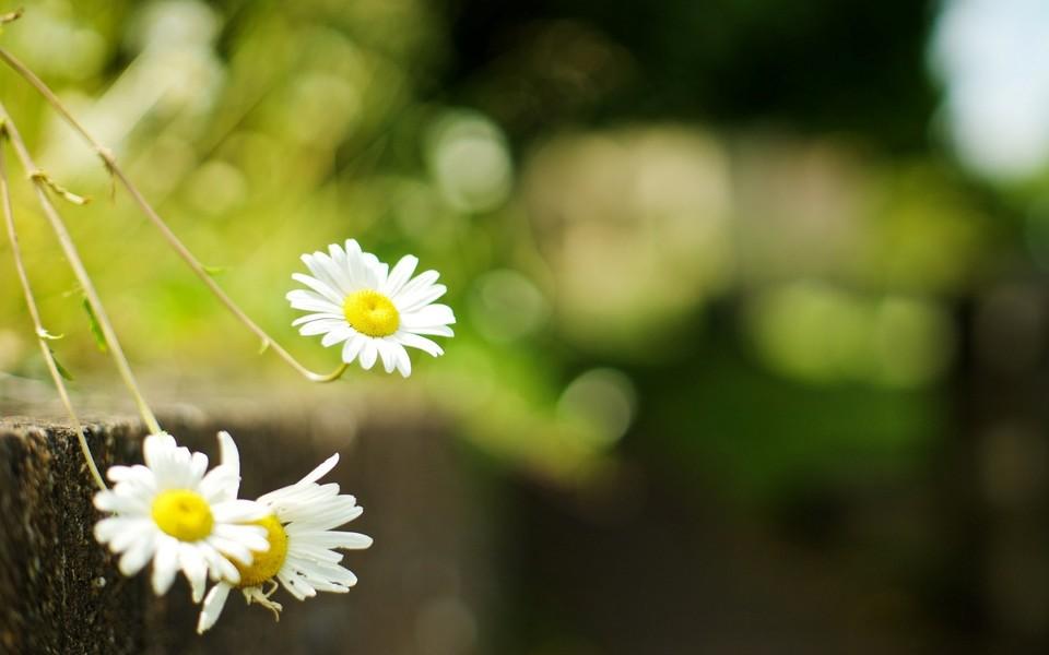 笔记本壁纸 自然风景壁纸 唯美花卉桌面壁纸下载