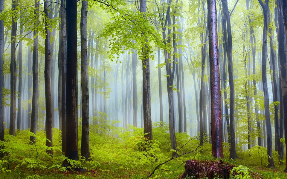 笔记本壁纸 自然风景壁纸 绿色护眼经典桌面壁纸下载