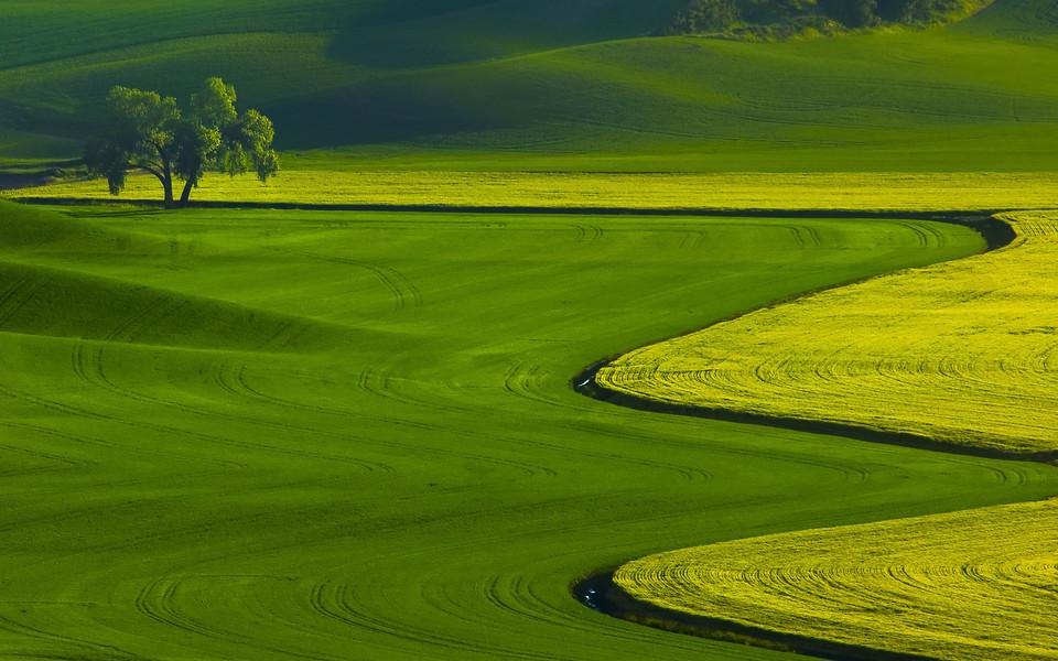 电脑壁纸 自然风景壁纸 绿色护眼壁纸图集下载