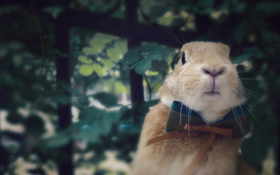 兔子壁纸 可爱动物小兔子高清电脑壁纸下载   (11/12) 小箭头图标亲