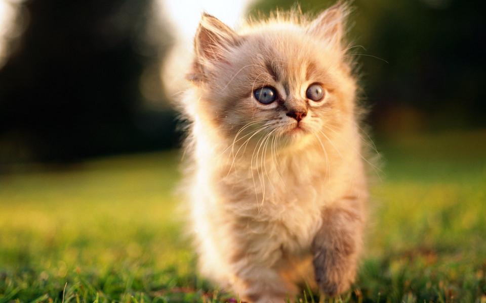 可爱猫咪高清壁纸-zol桌面壁纸