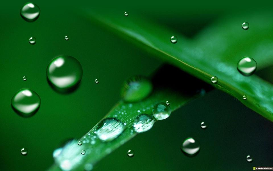 树叶上的水滴桌面壁纸