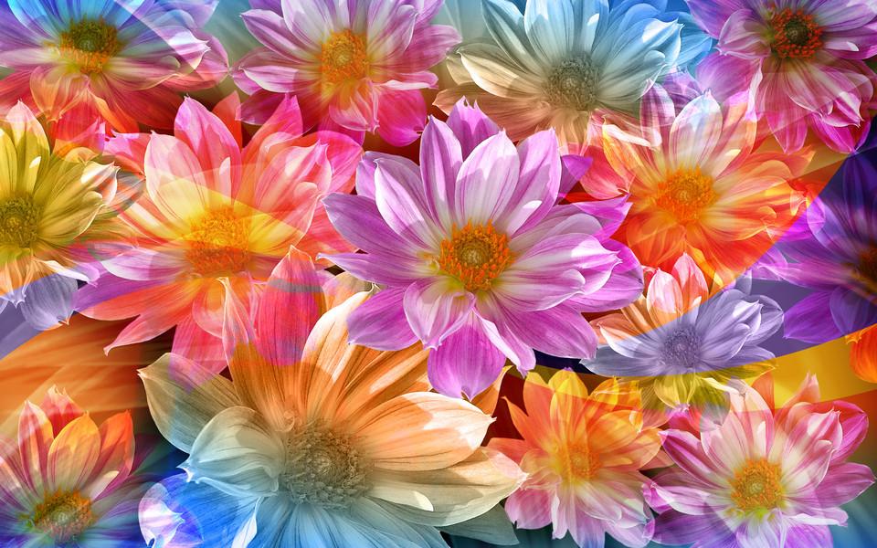 彩绘鲜花高清桌面壁纸