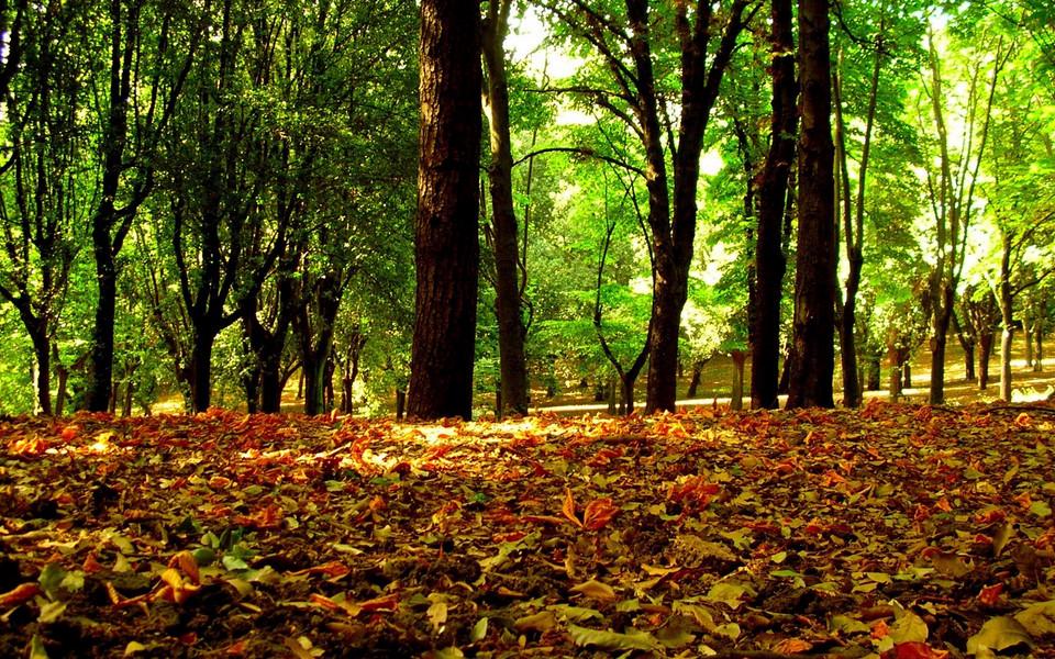 电脑壁纸 自然风景壁纸 秋天美丽物语高清壁纸下载